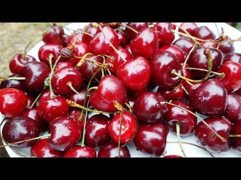 Sweet Cherry Varieties