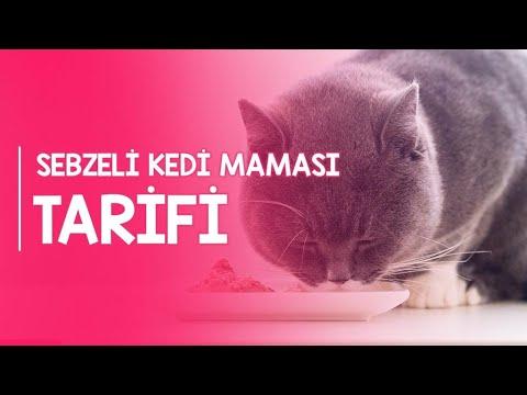 Sebzeli Kedi Maması Tarifi