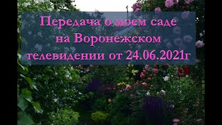 Фото Передача о моем саде Воронежского телевидения от 24. 06. 21 СЕЗОН ЗАБОТ.