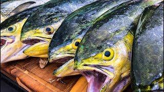 Dorado, Mahi Mahi, Dolphin {Catch Clean Cook}  Mahi Piccata