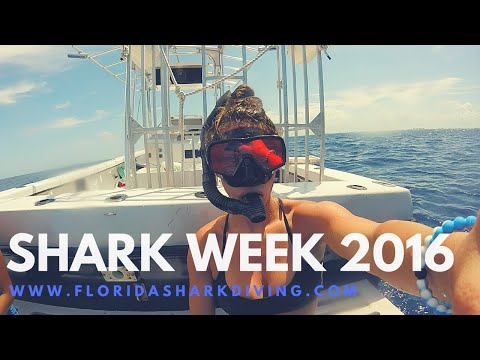 Bikini Girls Diving with Sharks | Shark Week 2016