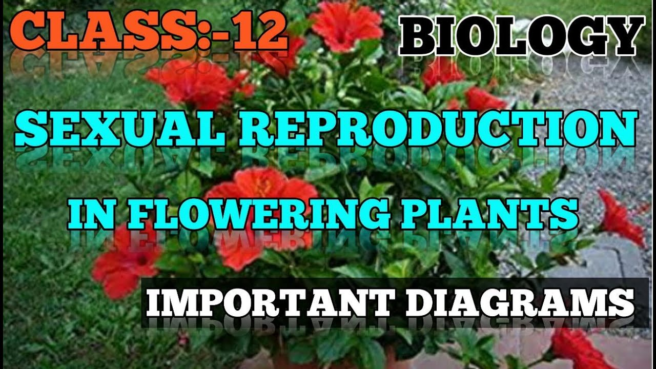 Class 12 biology chapter 2 sexual reproduction in ...