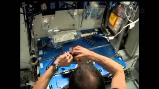 Space Station Live: Seedling Growth