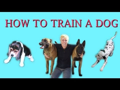 How To Train Your Dog With A Clicker Youtube