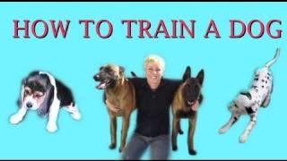 How To Train A Dog- Dog Training Clicker