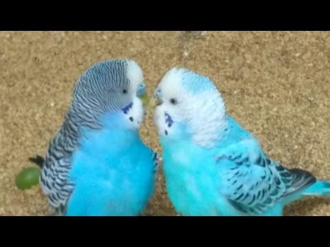 Romantic colorful love birds