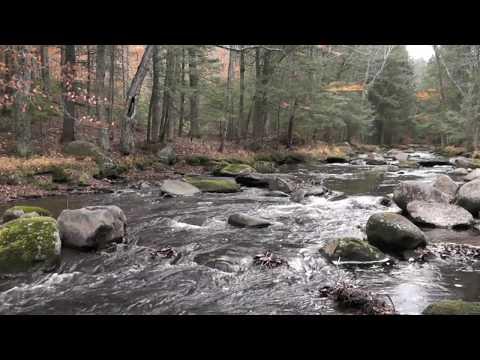 Babbling Brook ASMR - 1080P HD