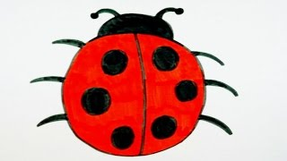 ladybug drawing drawings clipartmag paintingvalley