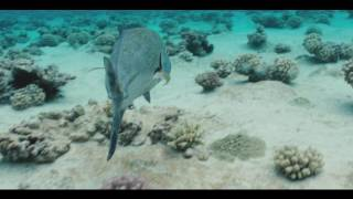 The Forgotten Atoll - 2nd Teaser Trailer