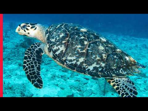 Travel | TriCity Scuba's February Grand Cayman Trip