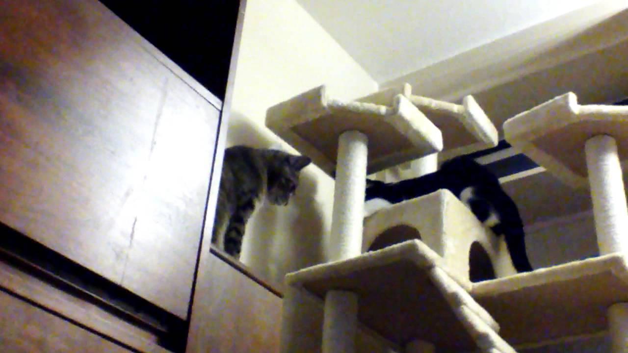 cat jungle gym - Cat Jungle Gym