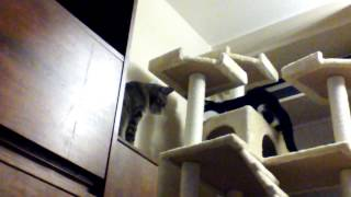 Cat Jungle Gym