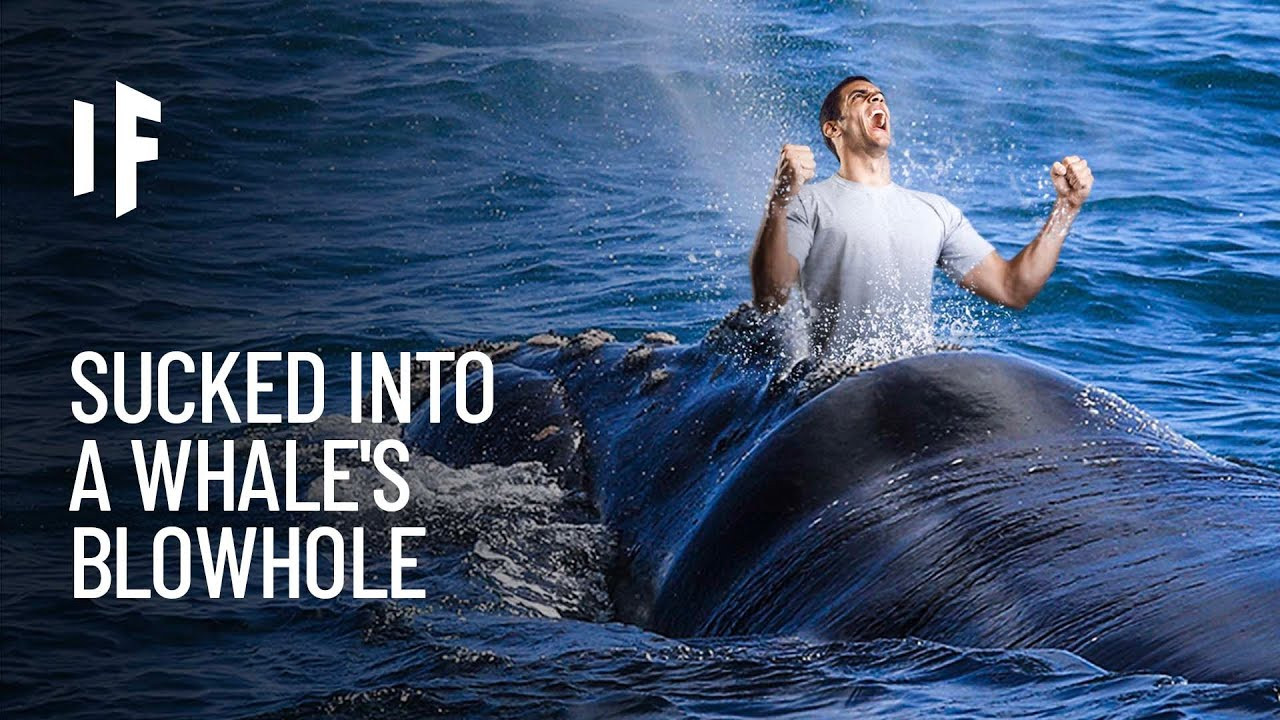 What If You Were Sucked Into a Whale's Blowhole?