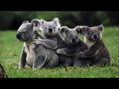 #Животные красной книги 4 выпуск    Исчезающие виды животных