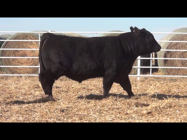 Express Ranches Lot 346