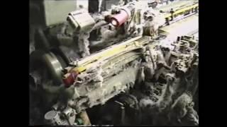 видео Torr Express (Fem) От (Djsort Seeds)