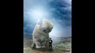 Big Cat Photoshop Manipulation for Beginners 2018