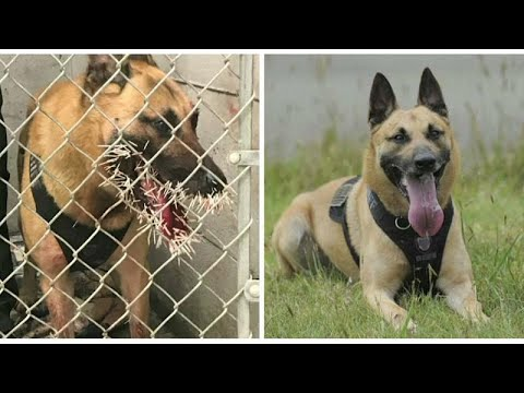 شاهد.. كلبة بوليسية تتلقى 500 شوكة في وجهها من حيوان النيص…  - نشر قبل 8 دقيقة