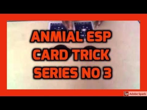 ONLINE MAGIC TRICKS TAMIL I ONLINE TAMIL MAGIC #357 I ANIMAL ESP CARD TRICK NO 3