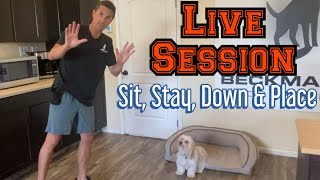 Watch me train not jumping and basic obedience behaviors