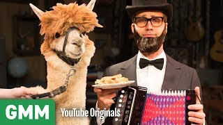 connectYoutube - Attracting An Alpaca With An Accordion | Nowhere Else