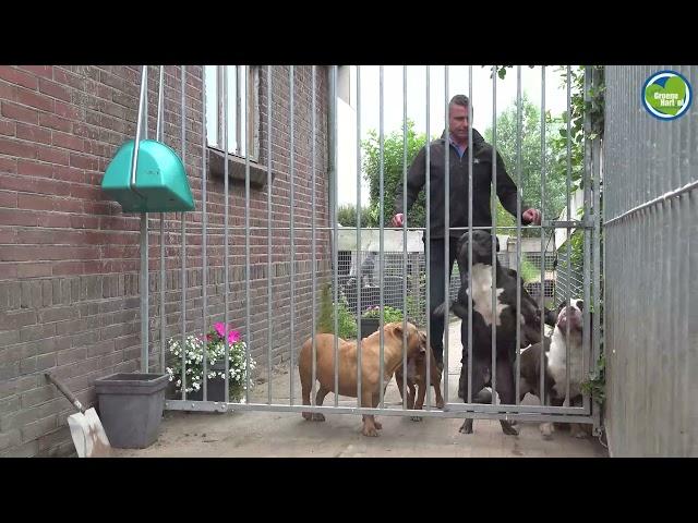 WIE WAT WAAR WAAROM bij Marcel's Doggy Farm