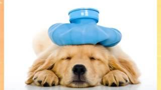 Когда можно стерилизовать собаку?