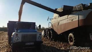 Кукуруза Маис гибрид Новый, урожайность 55 ц/га
