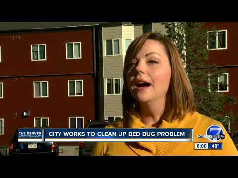 City addressing bed bug reports in Denver Human Services building