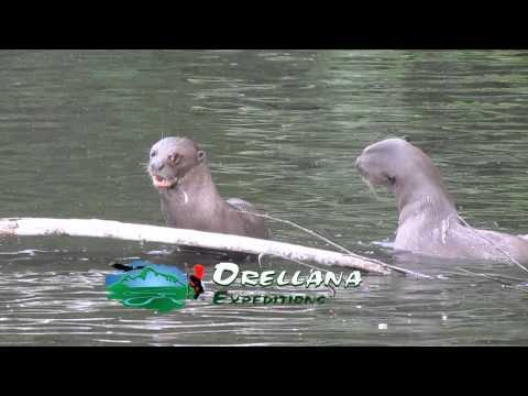 rain forest manu park  orellana expeditions