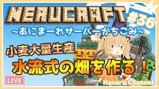 [LIVE] 【Minecraft】水流式の自動収穫畑をつくるぞー!【因幡はねる / あにまーれ】