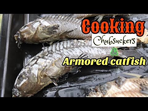 Cooking Armored Catfish And Chubsuckers