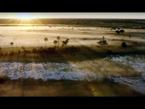 10 Hours Of Relaxing Planet Earth II Grassland Sounds | Earth Unplugged