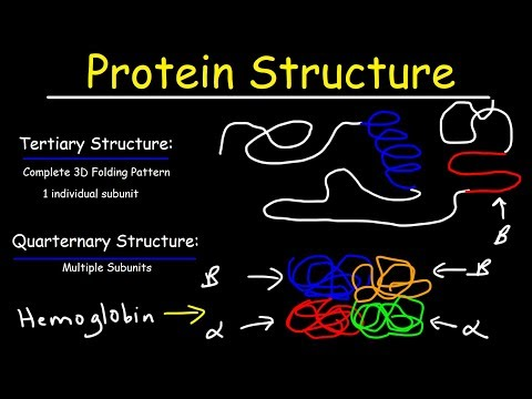 Protein Structure - Primary, Secondary, Tertiary, & Quarternary - Biology