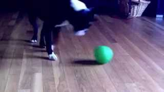 How to Roll a Treat Ball