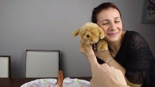 YILBAŞI HEDİYEM KÜÇÜK CANLI EVCİL HAYVAN (Köpek Korkumu Yendim, Little Live Pets) Bidünya Oyuncak