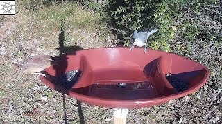 Football Tray Bird Feeder