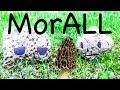 MorALL