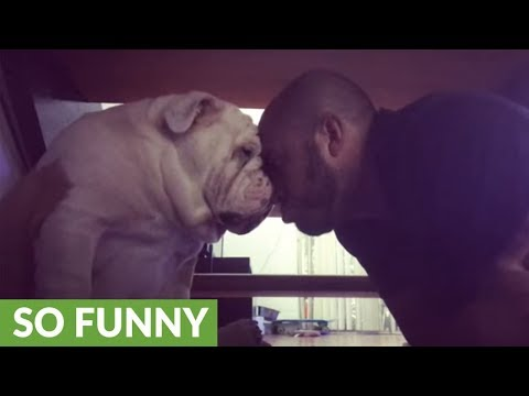 Owner Tries His Best To Sweet-talk Bulldog Into Taking Shower