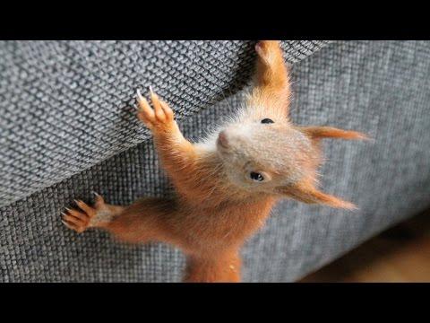 Eichhörnchen - Toben, Spielen, Knabbern, Wachsen