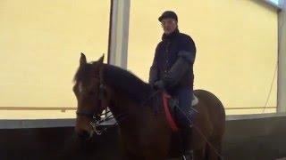 Конный спорт обучение. Видео уроки. Михаил Кизимов. Остановка. Лошадь всегда начеку.