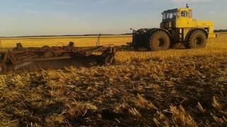 Провокация сорняка, БД-10 после уборки 2016го.года.
