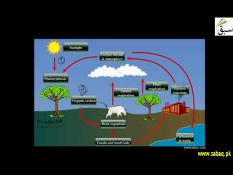 Biogeochemical Cycles, Carbon Cycle