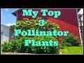My Top 3 Pollinator Plants~