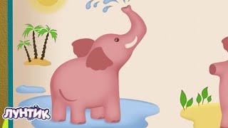 Лунтик В мире животных Сборник мультиков для детей