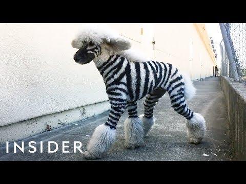 Salon Grooms Pets To Look Like Wild Animals