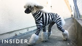 How to Make a Zebra Dog