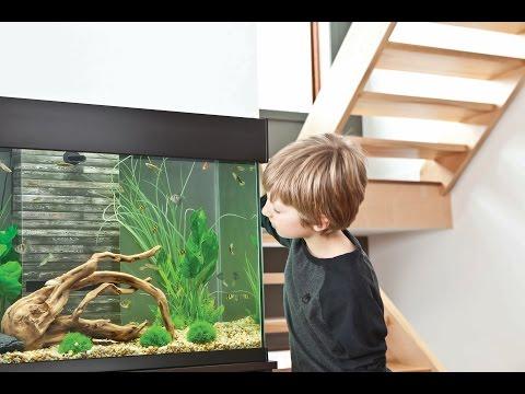 HOW TO: Feed Aquarium Fish