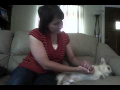 Canine Massage Therapy Test