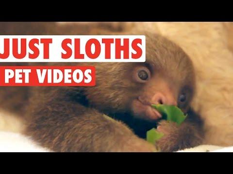 Superb Sloth Video Compilation 2016